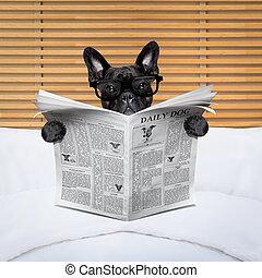 avis, hund, seng