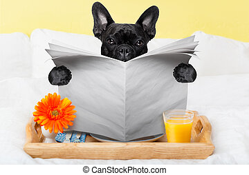 avis, læsning, hund
