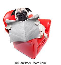 avis, sofa, hund