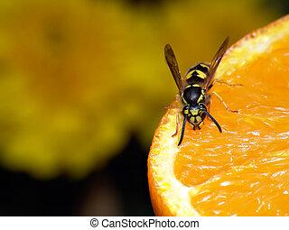 avispa, en, naranja