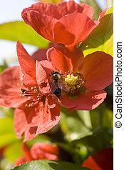 avispa, flor, rojo