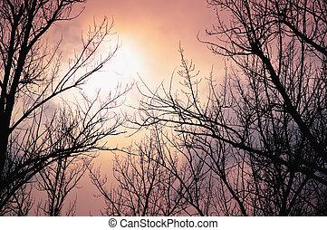 avlövada, träd, mot, den, vinter, skymning, bakgrund
