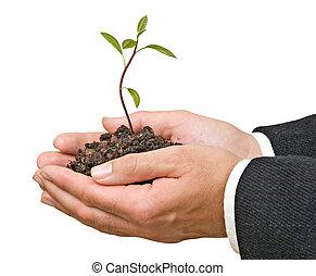 avocado, boompje, in, handen, als, een, cadeau, van,...
