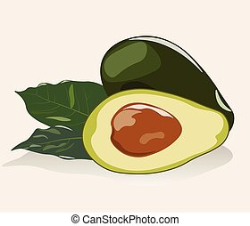 Avocado fruit isolated. Vector