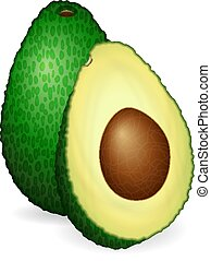 Avocado on a white background. Vector illustration.