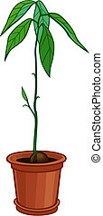 Avocado plant - illustration of a young avocado plant ...