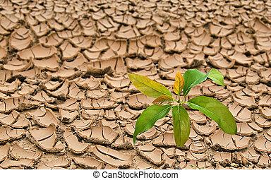 Avocado sapling growing from barren land