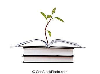 avocado, sapling, i tiltagende, af, åben bog
