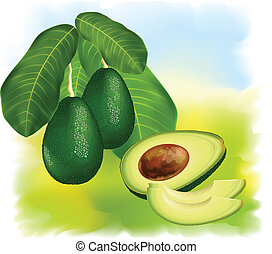Avocados on a branch with leaves. Half of the fruit with...