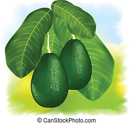 Avocados on a branch with leaves. Vector illustration.