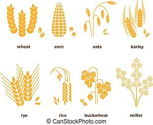 avoine, maïs, grains, blé, icons., seigle, vecteur, riz, orge, céréale