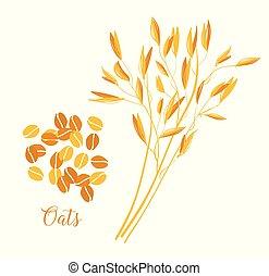 avoine, oats., grains, céréales, grain., pointes