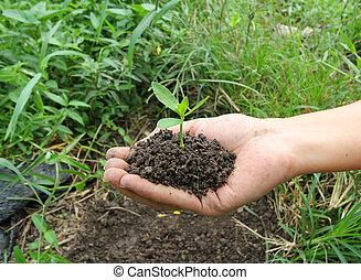 avoirs, peu, vert, plante, mains
