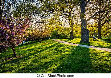 avond, licht, op, kleurrijke, bomen, in, druid, heuvel,...