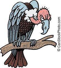 avvoltoio, selvatico