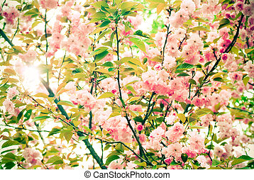 Awaken - pink flowering tree blooms in spring