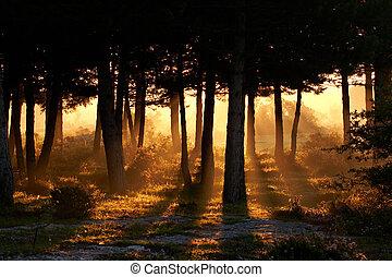Awakening of day in summer - Awakening of day in the forest