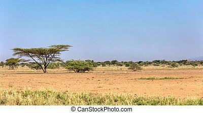 awash, 国立公園, サバンナ, エチオピア