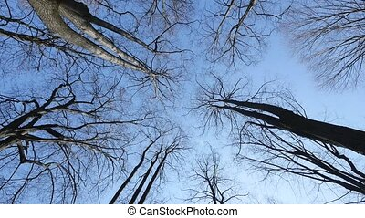 Awesome autumn forest. The tops of the trees bear against the blue sky.