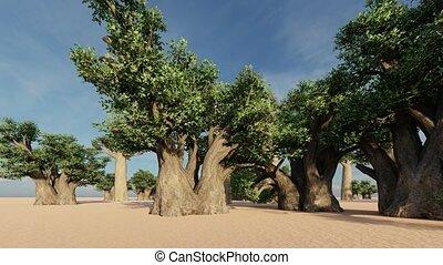 Awesome baobab trees in African savannah