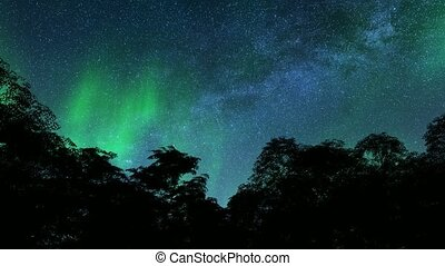 Awesome northern lights aurora trees winter landscape 4k
