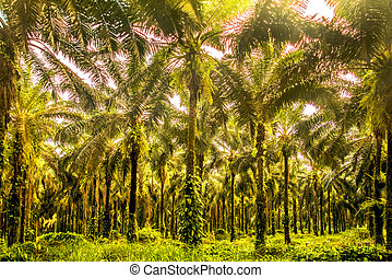 Awesome palm grove in Costa Rica