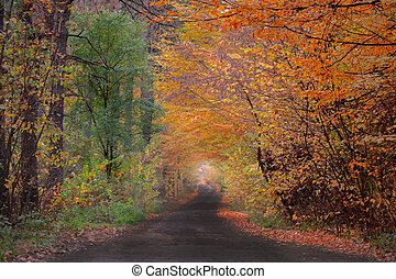 Awesome sunny forest. Incredible view on autumn forest. Location place scenery in Ukraine, Europe