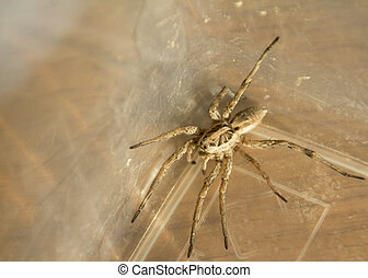 Awesome Wolf Spider