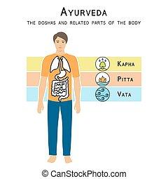 Ayurveda vector illustration. Ayurveda doshas. The doshas...