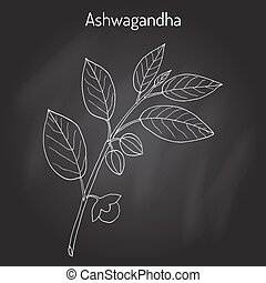 Ayurvedic Herb Withania somnifera, known as ashwagandha, Indian ginseng, poison gooseberry, or winter cherry