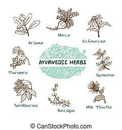 Ayurvedic herbs collection