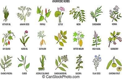 Ayurvedic herbs, natural botanical set. Hand drawn vector...
