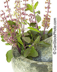 Ayurvedic Remedy Holy Basil or Tulsi in a Stone Pestle and Mortar