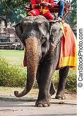 ayutthaya, elefant, thaila, turisti, cavalcata, parco, intorno