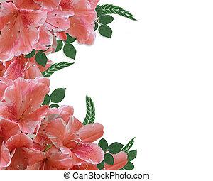 azálea, floral határ