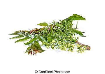 Azadirachta indica with flowers. - Azadirachta indica or...