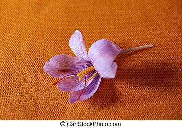 azafrán, costoso, condimento, abierto, close-up., brote flor