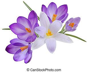 azafrán, flores