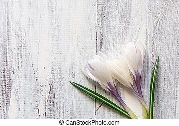 azafranes, blanco, plano de fondo