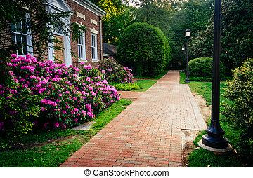 Azalea bushes and a building along a brick path at John Hopkins