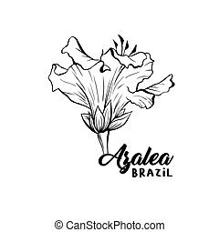 Azalea, ericaceae flowers ink pen sketch - Azalea, ericaceae...