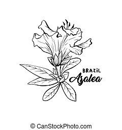 Azalea, ericaceae flowers ink pen sketch - Azalea Flower ...
