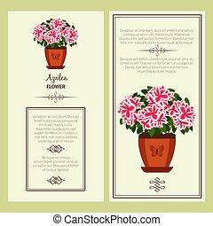 Azalea flower in pot banners - Azalea flower in pot vector...