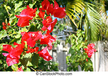 Azalea Flowers in front of Fence and Palm Trees