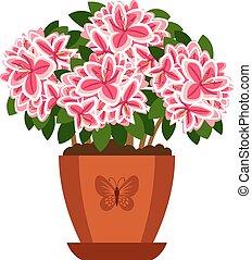 Azalea hoseplant icon - Azalea hoseplant with pink flowers...