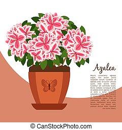 Azalea indoor plant in pot banner template, vector...