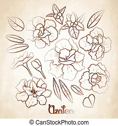 Azalea leaves and flowers collection. Vector graphic floral...