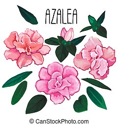 Azalea leaves and flowers collection. Vector design elements isolated on white background