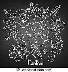 Azalea leaves and flowers collection. Vector graphic floral ...