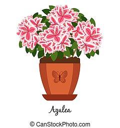Azalea plant in pot icon - Azalea plant in pot isolated on...